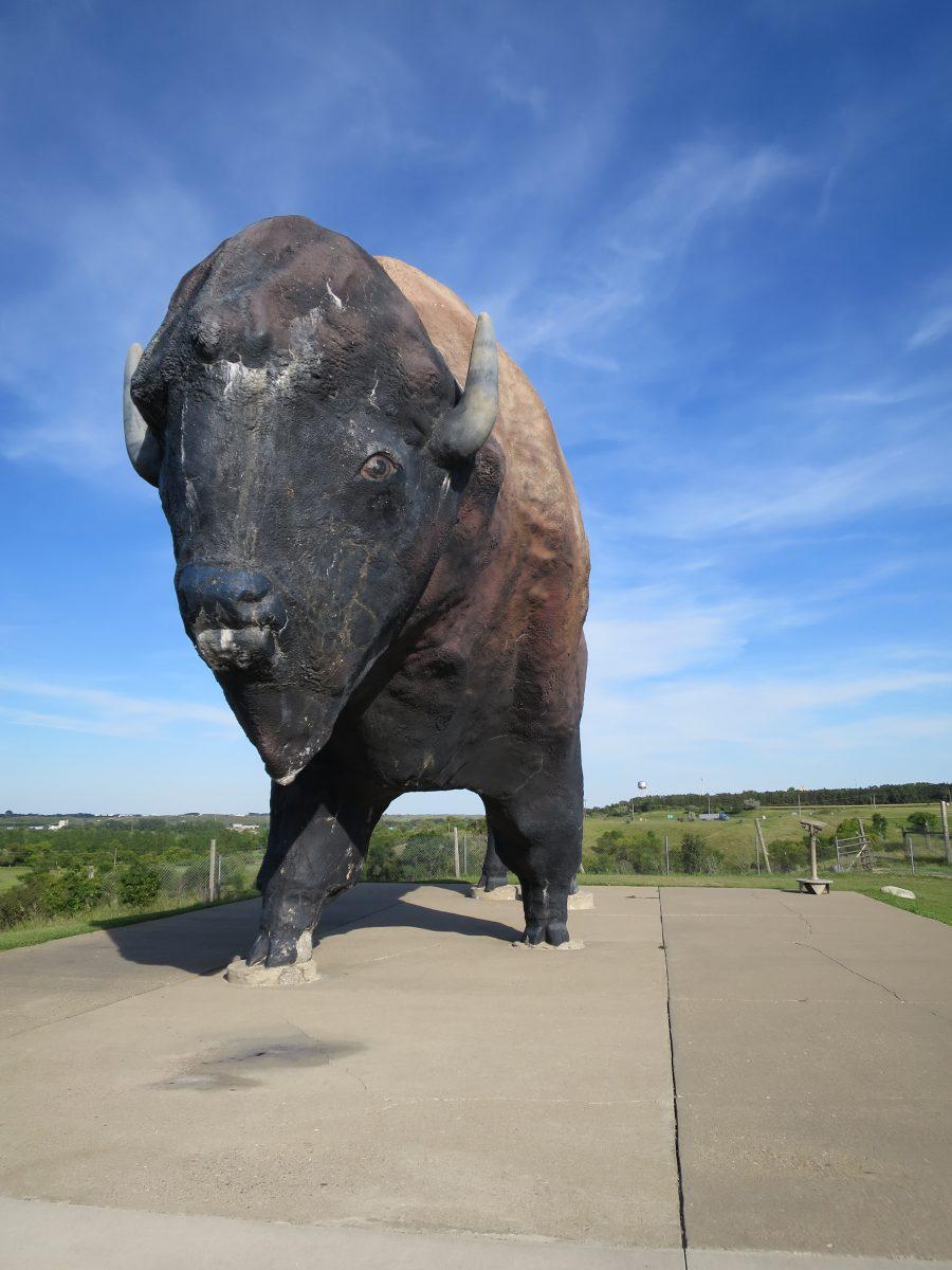 Colossal Buffalo