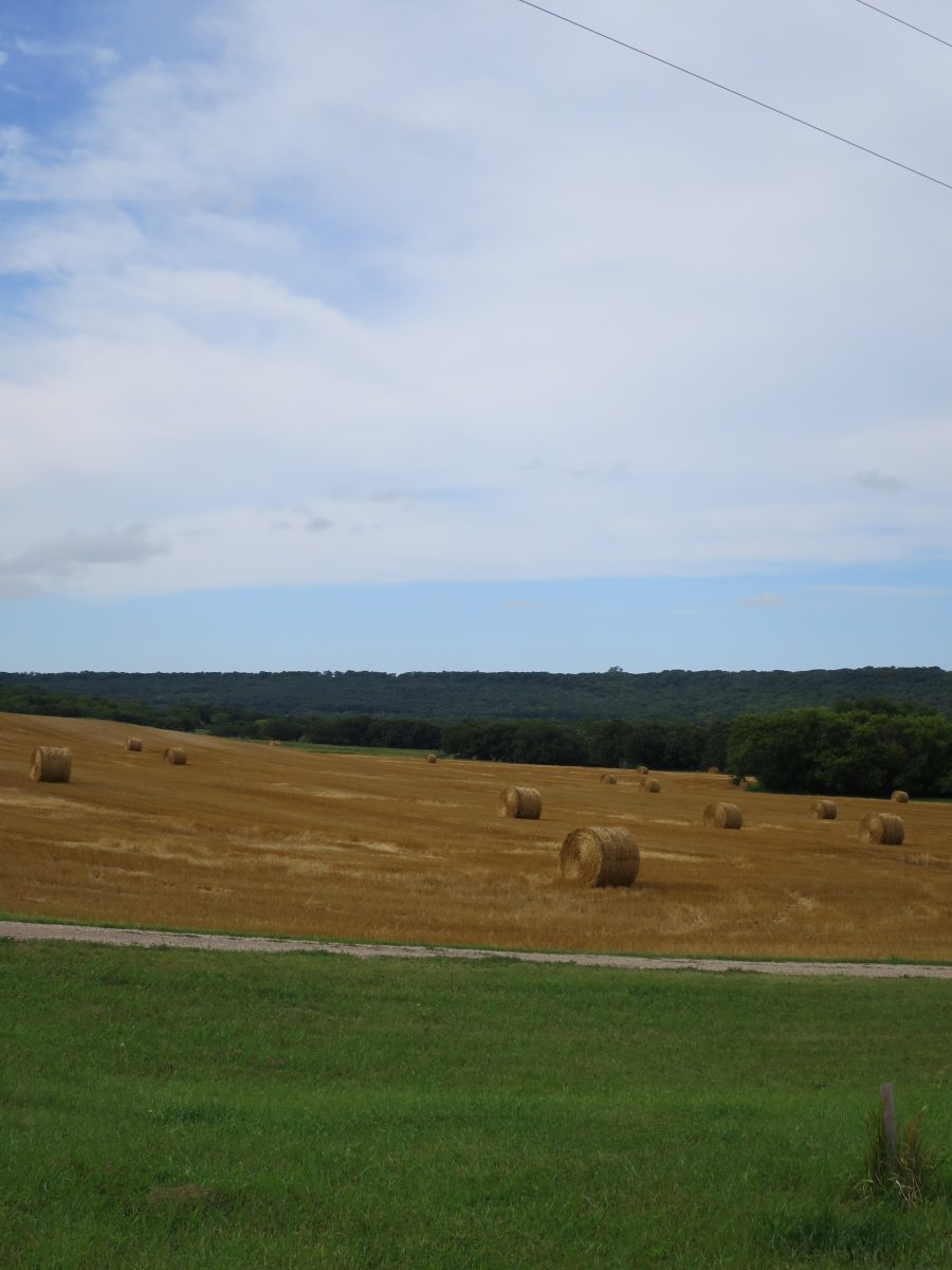 Sample Golden Field of Hay