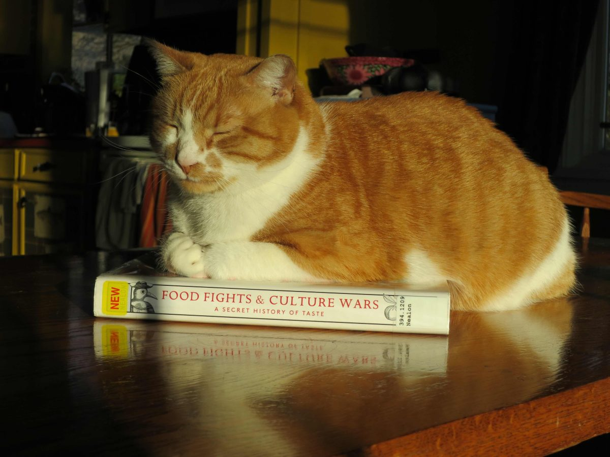 A cat on the book!